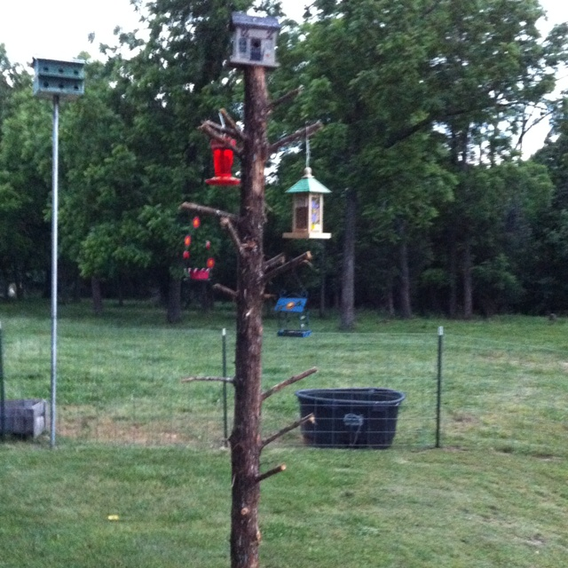 Projects To Try on 23 diy birdfeeders will fill garden birds