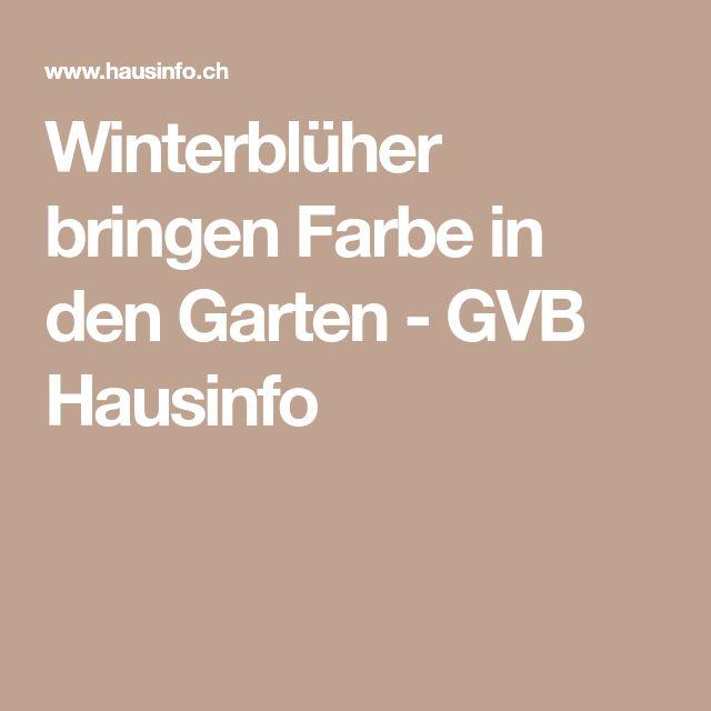 Winterblüher bringen Farbe in den Garten - GVB Hausinfo
