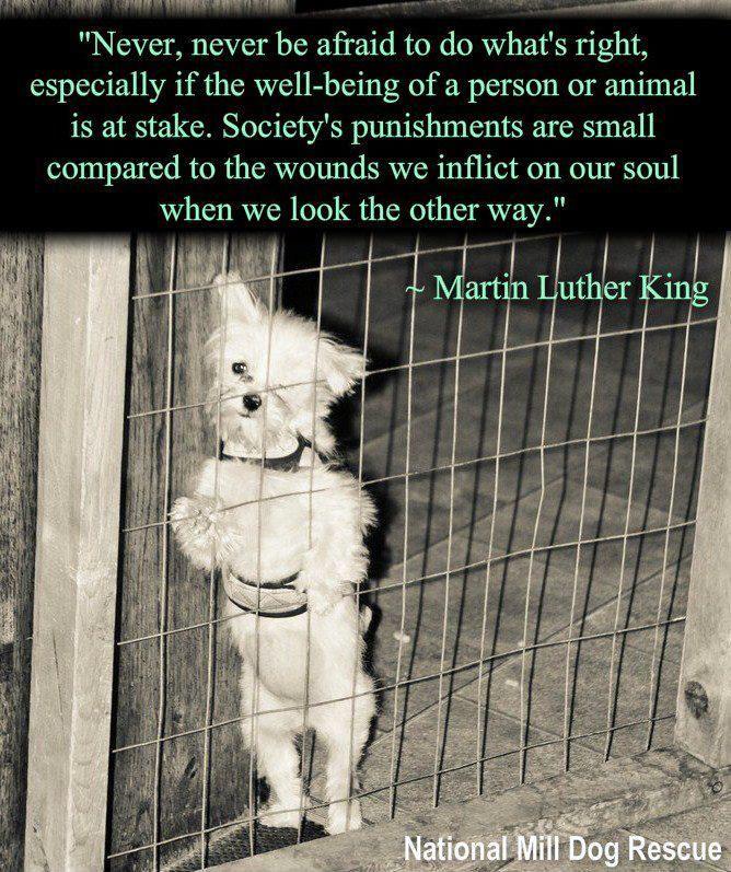 Pinterest Animal Quotes