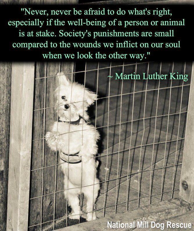 Martin Luther King / Welfare Compassion Animal Quote Be a guardian of animals everywhere by becoming an ambassador at http://www.fuzeus.com