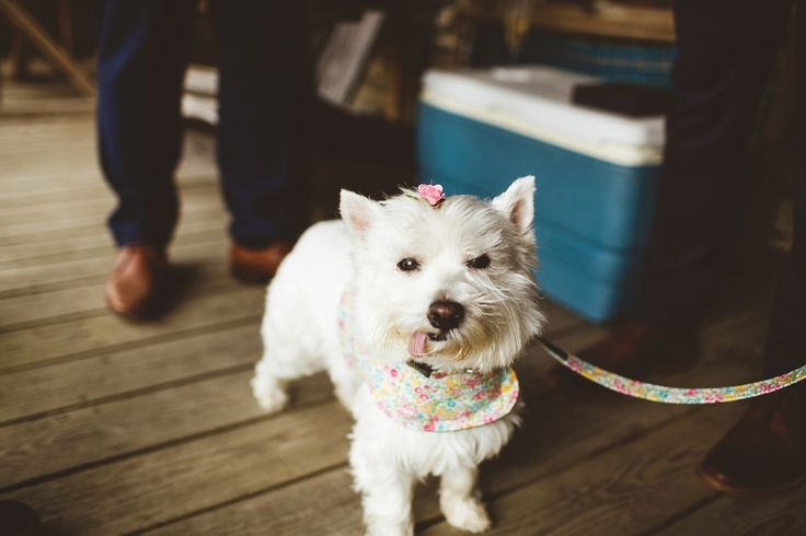 A cute furry guest at a  Magical Woodland Wedding in Wales. Image by Photography 34