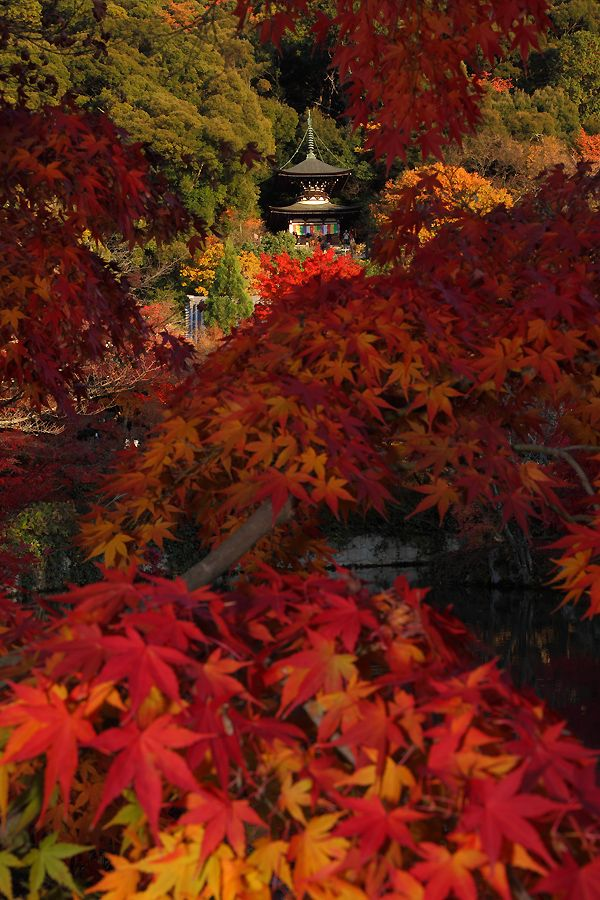 Eikan-do, Kyoto, Japan 永観堂 京都................autumn colors tumble down.............