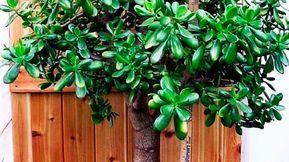Conoce como con tener estas plantas en tu casa puedes atraer cosas positivas a tu vida y a la de tus seres queridos, así como también sacar las malas