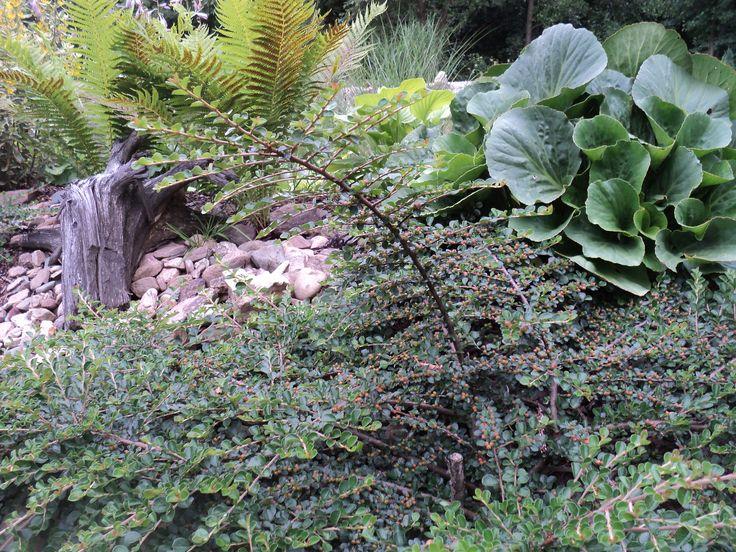 Val v zadní zahradě - červenec 2016