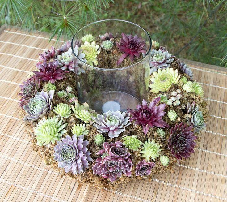 Photos of Succulents | Types of Succulent Plants