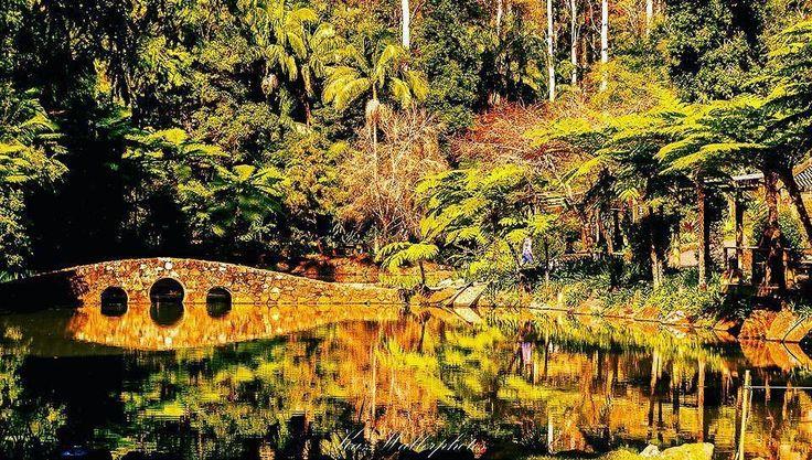 "Tamborine Mountain Botanical Gardens Queensland (@visittamborinemountain) on Instagram: ""Experience Autumn colours at the #tamborinemountainbotanicgardens The colours are beautiful. Photo…"""