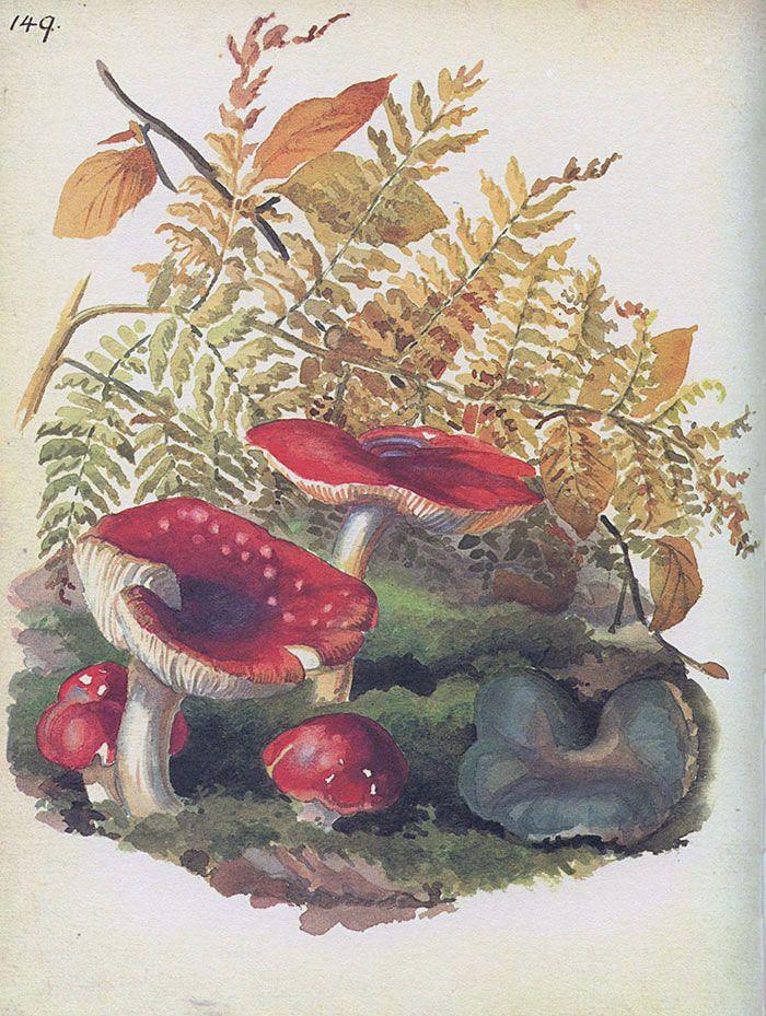 Fungi - Morning Earth Artist/Naturalist Edith Holden