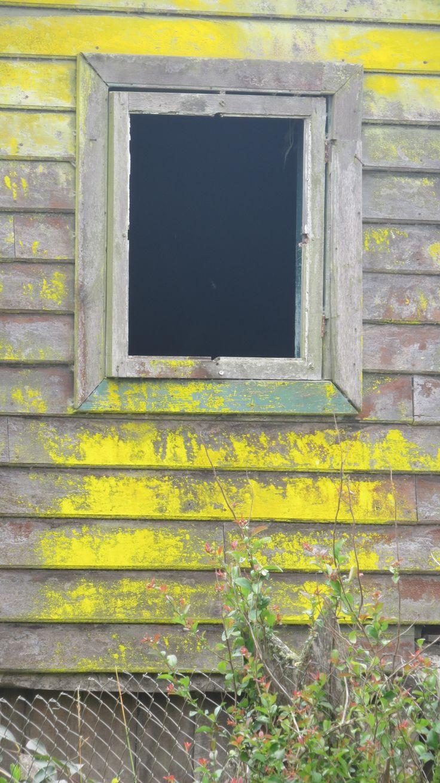 Amarillo en Vivanvo