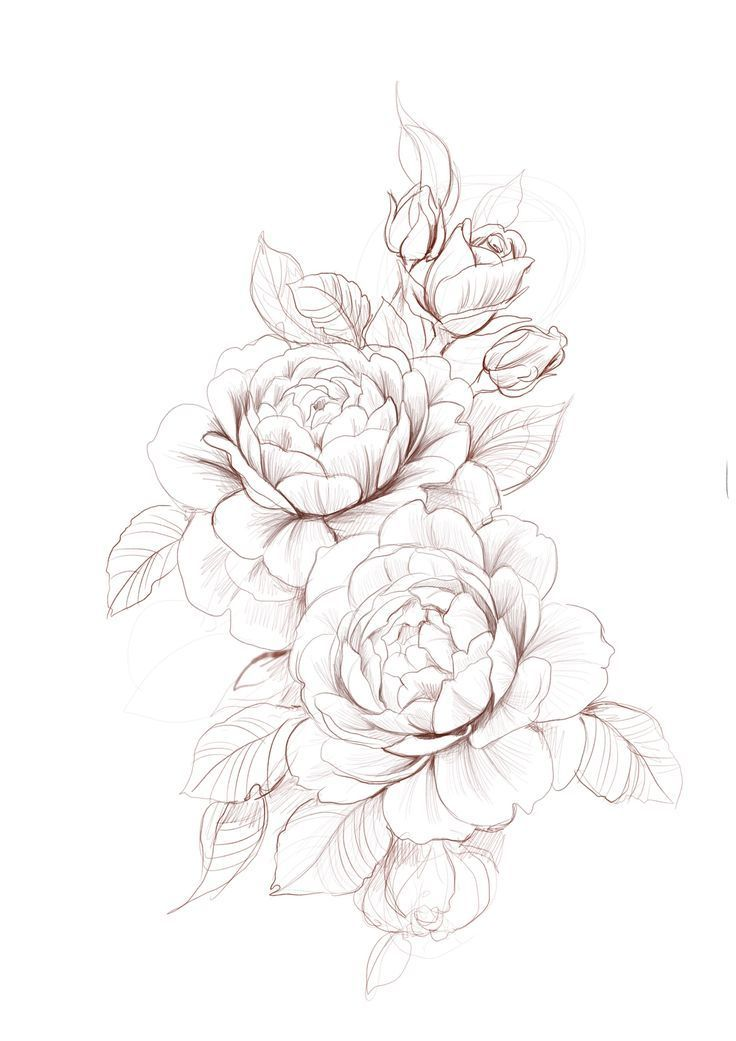 Stock Vector Of Beautiful Monochrome Black And White Dahlia Flower Isolated On Stock Vector Of Beautiful Monochrom In 2020 White Tattoo Tattoos Peonies Tattoo