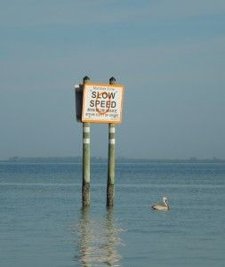 Pelican at slow speed.