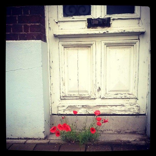 poppies groeien op de meest vreemde plaatsen