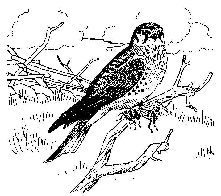 69 Falcon