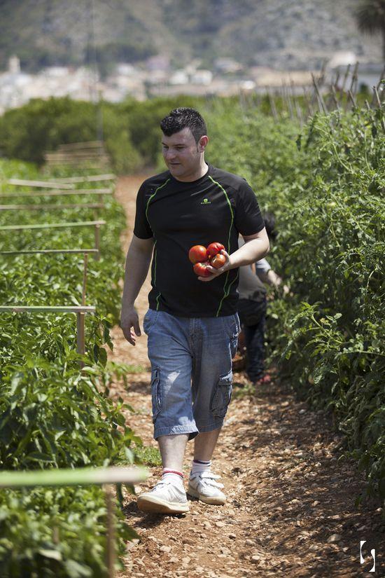 Con David Ariza y nuestros tomates...