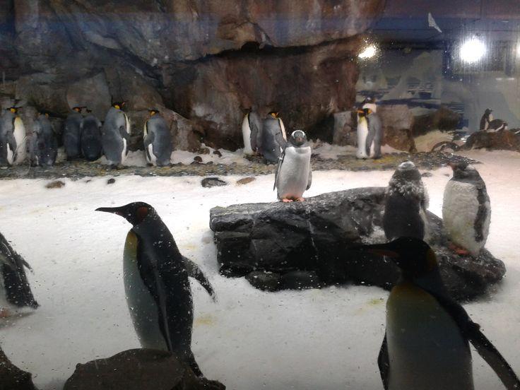 Kelly Tarlton Penguin Experience