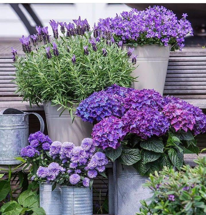 Pinspiration | hydrangeas & plants in pots