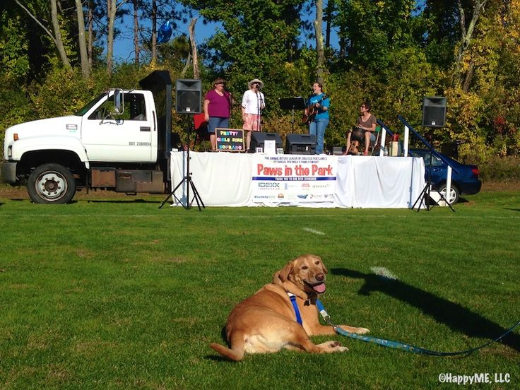 the 17th annual paws in the park for animal refuge league was a fundraising field day