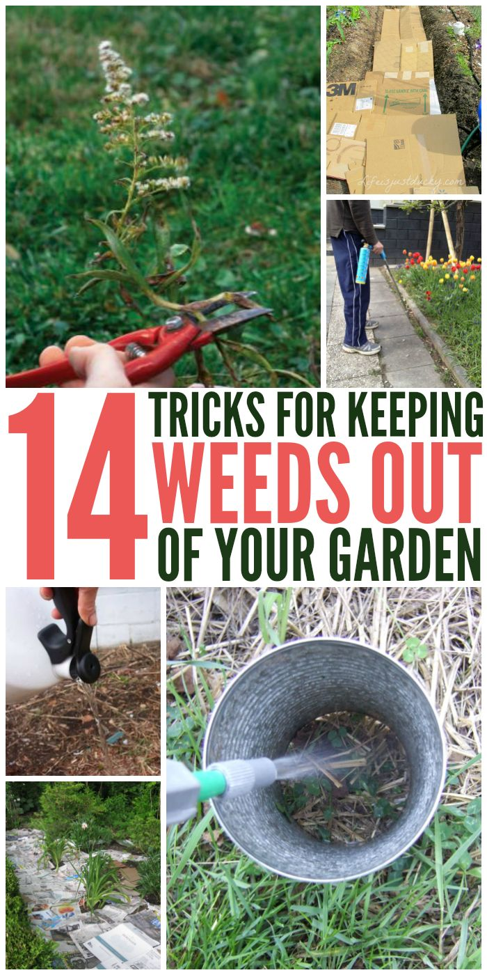 14 Tricks to Keeping Weeds Out of Your Garden - One Crazy House