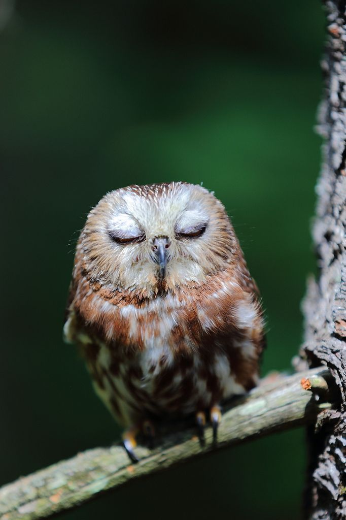 Owl 57 57 best images about O...