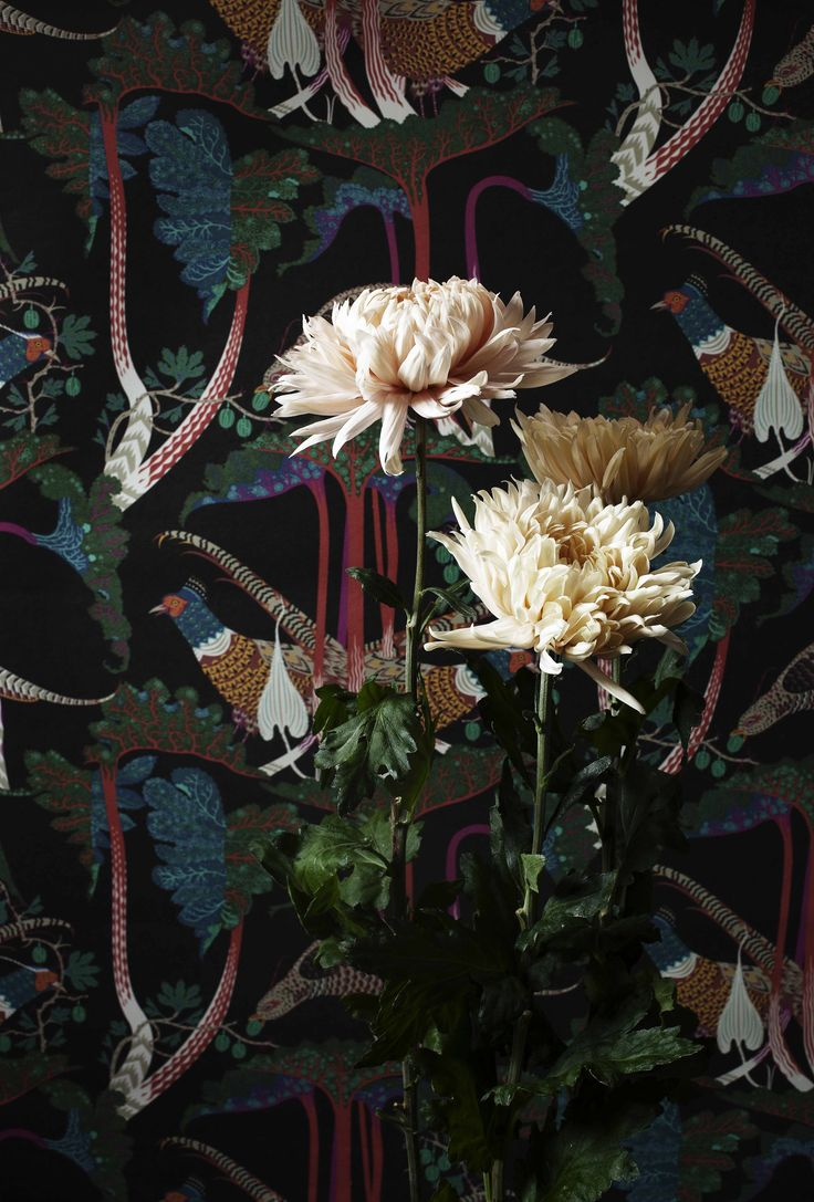 pheasants and rhubarb wallpaper by klaus haapaniemi