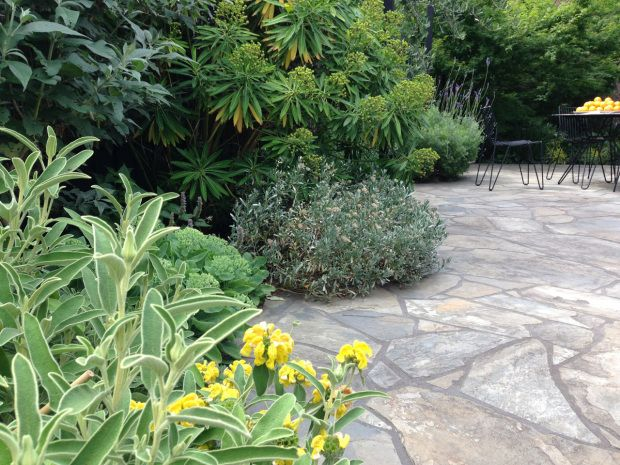 Yellow and purple Mediterranean garden