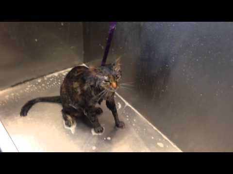 Watch This Talking Cat Protest Its Bath