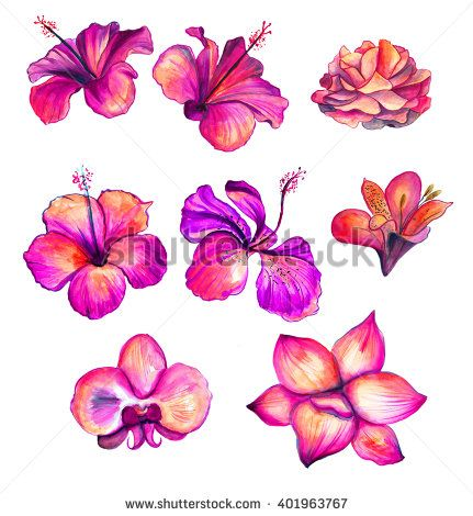 Bright red watercolor Hibiscus, rose, orchid, lily flowers collection, floral tropical set