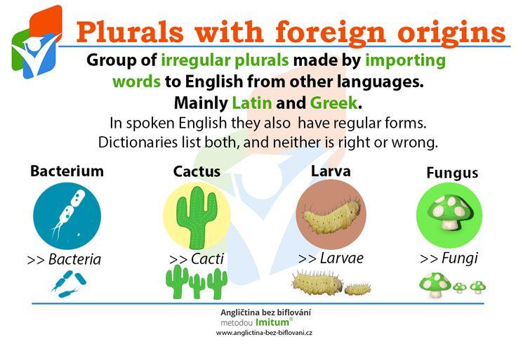 Anglická gramatika se hemží výjimkami. Není tomu jinak ani u tvarů množných čísel. Speciální kategorií jsou ty, které byly přejaty z cizích jazyků. Postupně si sice Angličtina vytvořila i jejich pravidelný tvar, stále se ale můžete setkat i s původní podobou. 🇬🇧  #English #Facts #Grammar #Plurals #IrregularPlurals #Anglictina #AnglictinaBezBiflovani