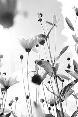 Amanda Thorbjörnsson - I min lilla värld av blommor