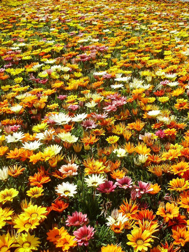 19 Best Images About Garden Borders On Pinterest Gardens 400 x 300