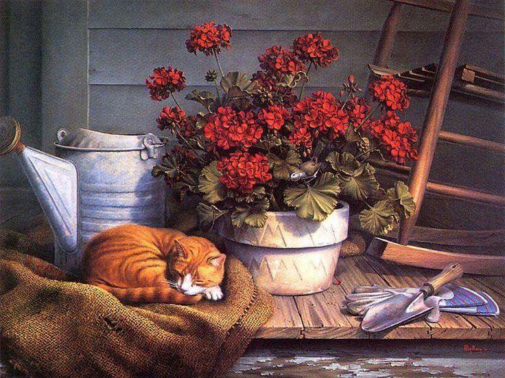 gatto dorme sotto pianta di gerani rossi