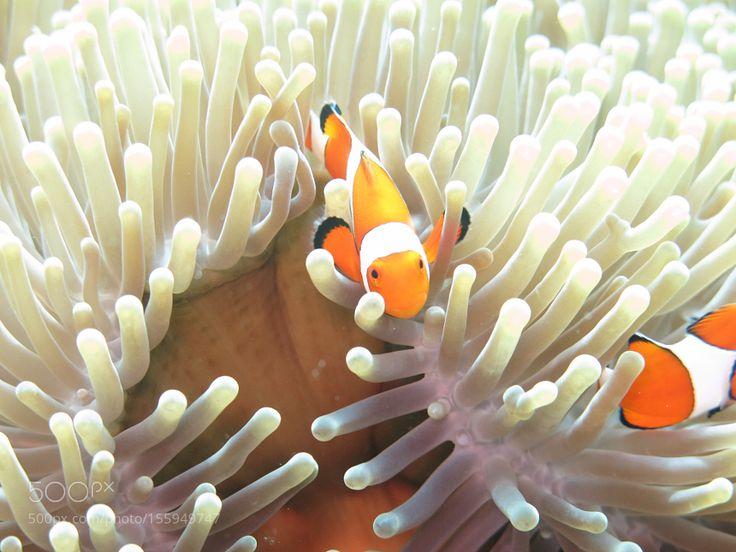 Nemo by pimeenta
