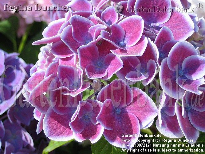 66 best rare flowers images on Pinterest   Rare flowers, Unusual ...