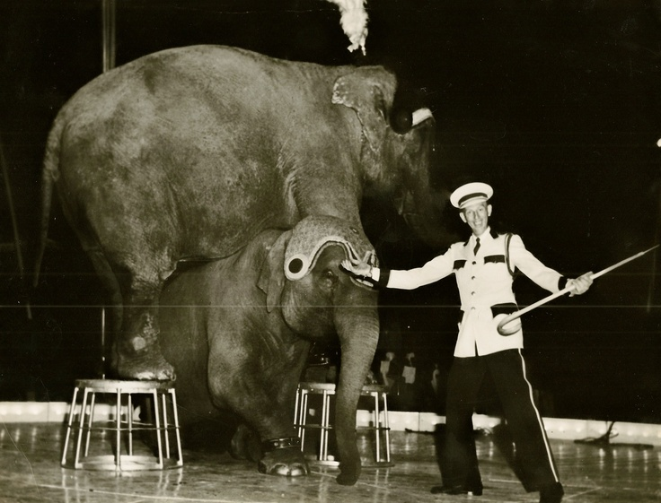 This is Jimmy Cole with his elephants on the Tom Pack Circus. Photo probably was taken in 1954.: Photo
