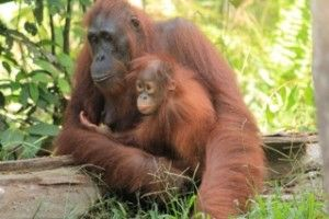 Palm Oil - how you can help to shape the future of endangered species and build a better world.