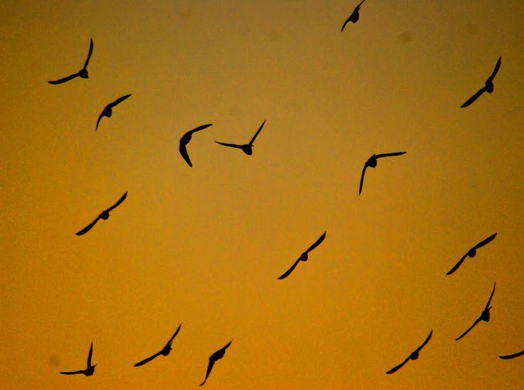 Pájaros volando hacia el Sol