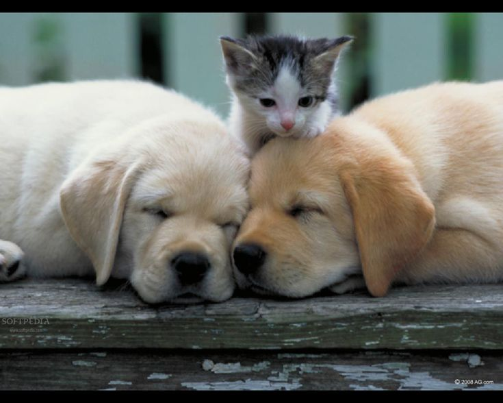 1000+ ideas about Kittens And Puppies on Pinterest | Cute puppies ...