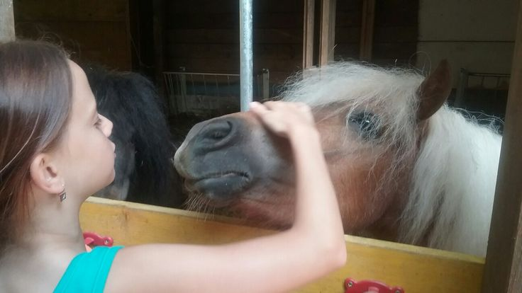 Horse Kisses