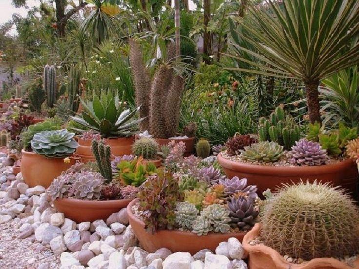 Hermosas composiciones con suculentas | Cuidar de tus plantas es facilisimo.com