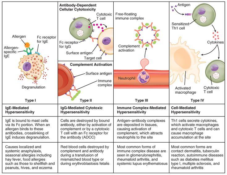 immune responses - Google Search
