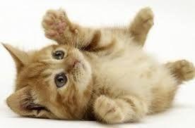Afbeeldingsresultaat voor schattige kat
