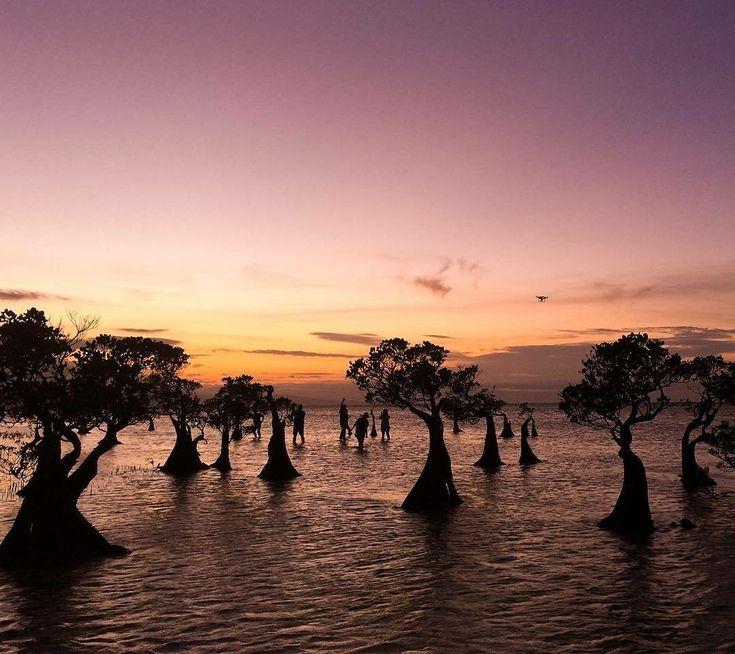 Capture the beautiful moment of Sunsets with the Dancing trees . . Location : Walakiri beach, Sumba Timur.  by : @ryangustavo80 . . #sumba #visitsumba #pulausumba #ExploreSumba #pantaiwalakiri #opentripsumba #tripsumba #tukangjalantrip #PesonaIndonesia #exploreindonesia #WonderfullIndonesia #ExploreNusantara #Liburan #liburanseru #liburanmurah  #Traveling #Travel #Tour #Tukang_Jalan #tukangjalan #TravelingGram  #folkindonesia #kelilingindonesia #sunset #sunsetbeach