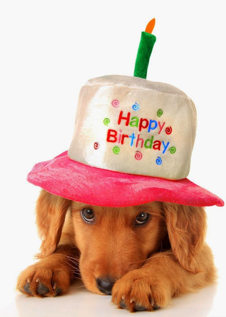 Best 25 Happy Birthday Puppy Ideas On Pinterest Boston