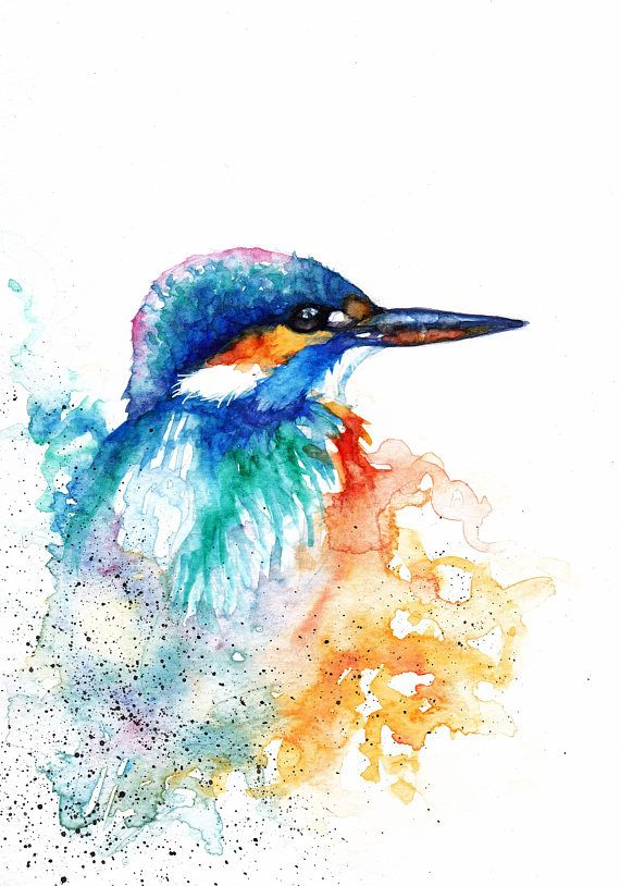 Kingfisher Original Watercolour Print Greeting Card Frammed By