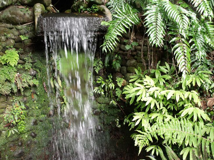 Pukekura Park, New Plymouth, NZ - pretty little water feature
