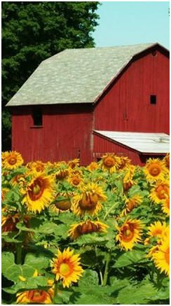 Print Free Small Barn Plans - Click to find a variety of practical, all-purpose small barn designs.