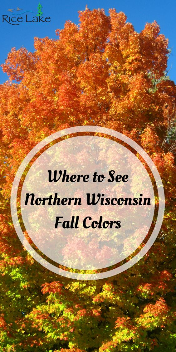 Where to See Northern Wisconsin Fall Colors | Autumn in Rice Lake, WI
