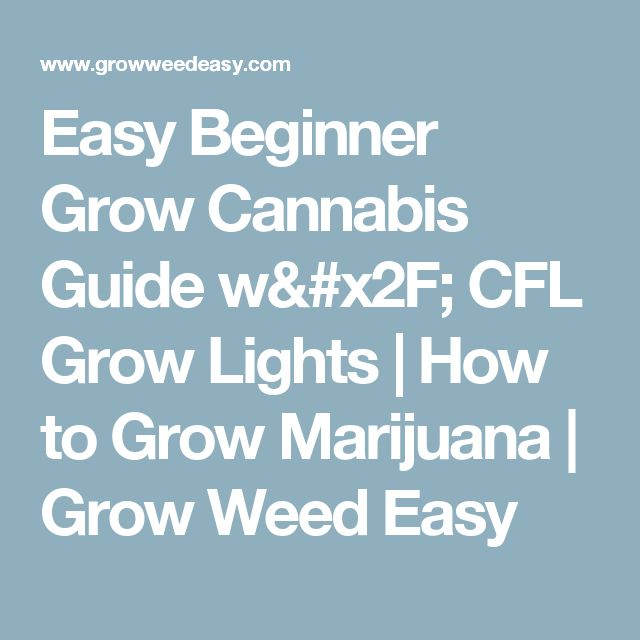 Easy Beginner Grow Cannabis Guide w/ CFL Grow Lights | How to Grow Marijuana | Grow Weed Easy