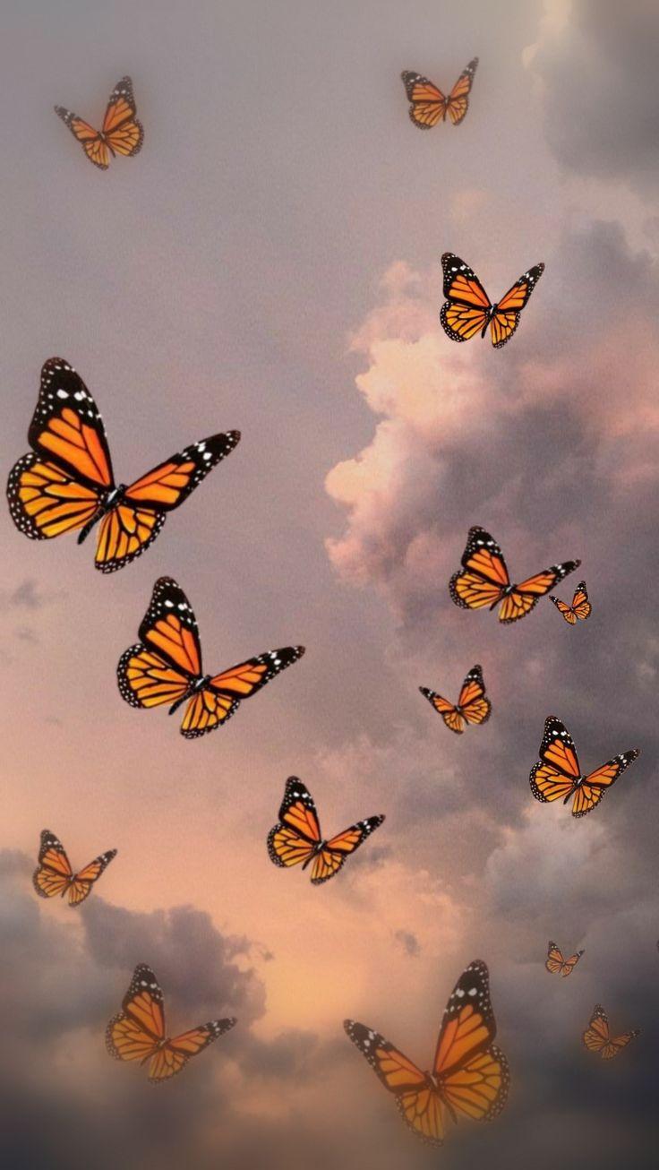 Sliced lemon on white background. Wallpaper for iPhone/Samsung Butterfly, Sky, butterflies ...