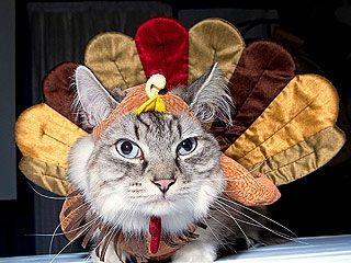 23 Animals Who Are Not Enjoying Thanksgiving https://www.facebook.com/furbabiesarethebestbabies: