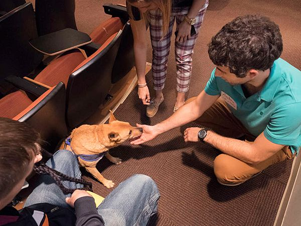 Jersey, a mutt, is one of the country's first full-time college therapy dogs.  He has office hours, a university ID and fans among the student body at Drexel. The shelter dog is cared for by Kathryn Formica, the school's coordinator of student fitness and wellness; she keeps his calendar. He gets 10 visitors a week during the semester, and 20 a day during exams. (April 2015, PA) http://www.philly.com/philly/living/pets/20150401_At_Drexel__a_therapy_dog_has_a_devoted_student_following.html